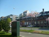 Kirsebærtre i Kjølberggata (2009)